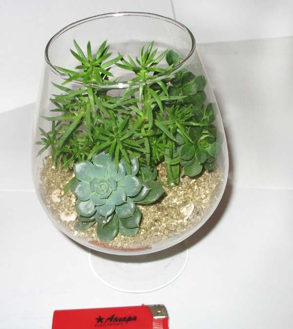 В этой композиции использованы цветы-суккуленты и заменитель почвы - вермикулит, благодаря чему композицию можно...